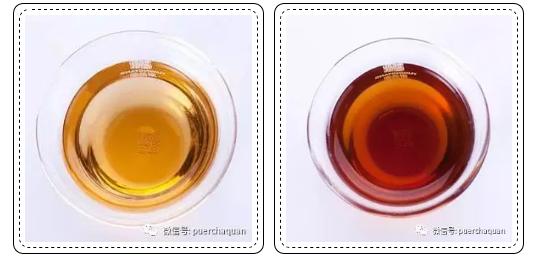 普洱生茶和普洱熟茶大不同,区别在哪?